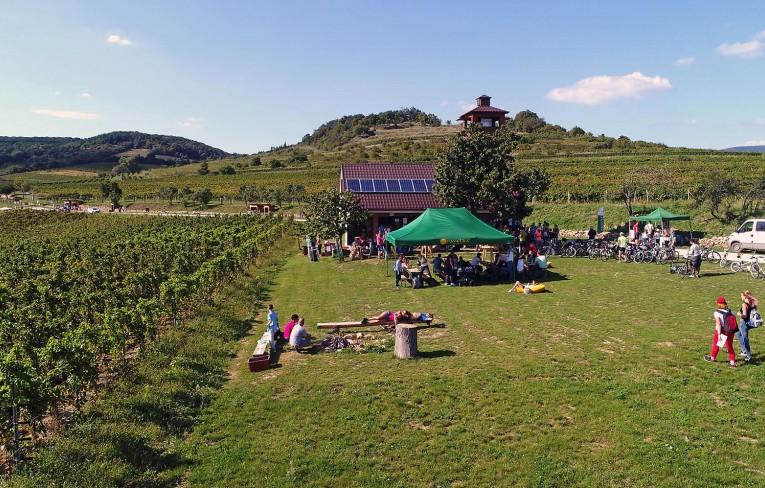 Deň vo vinohradoch 2019